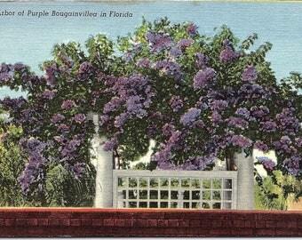 Florida, Purple Bougainvillea - Vintage Postcard - Linen Postcard - Unused (D)