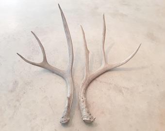 2 natural real deer antler sheds design decor crafts art centerpiece gift rustic natural antler sheds lamp display