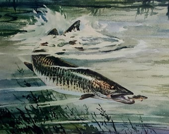 Vintage  Fishing Lithograph William J. Schaldach Tiger Muskie Print Tiger Muskie Chasing It's Prey Large Fish Print House of Seagrams