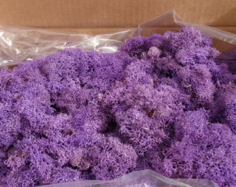 Reindeer Lichen-Lavender