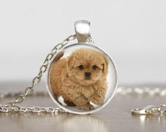 Peekapoo Pendant Necklace or Keychain