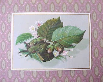 Lovely Victorian Era Botanical Scrap with Leaves, Blossoms and Fruit