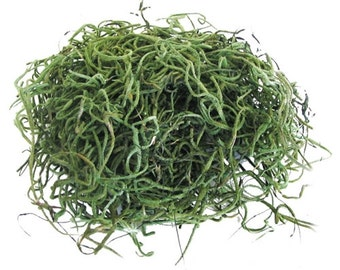 Live Spanish Moss