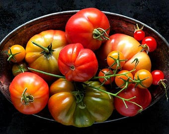 Cool Climate Tomatoes, 255 seeds, five tasty heirlooms, short season crop, cool weather, bulk seed packs, spring garden, fall garden
