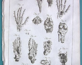 HUMAN ANATOMY Bones of Hands Knee & Foot Sternum Clavicle Ligaments - 1797 Copperplate Antique Print