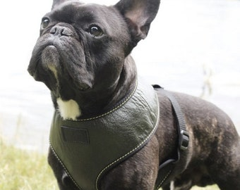 Leather Dog Harness & lead