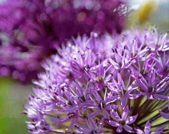 flower photograph: purple flower wall art