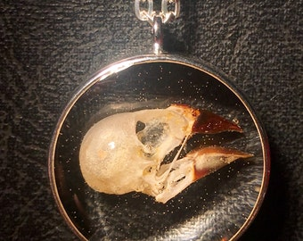 REAL Finch Bird Skull In Floating Resin Filled Ossuary Taxidermy Specimen Necklace Vulture Culture