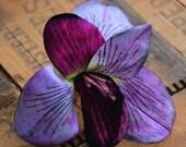 "Large Flower Clip, Lily Fascinator, Purple Floral Hair Clip, Vintage Headpiece, Pinup Hair 1940s, Violet Magenta - ""Stars in Her Eyes"""