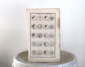 1719 Antique Engraving Greek Symbol Art Paris 1719 9 1/4 x 15 inches