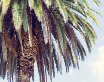 Palm tree photography, los angeles photograph, palm tree print, bohemian decor, beach decor, palm trees, california living, large wall art