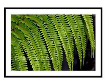 Fern Botanical Print, Nature Photography, Wall Art for Living Room, 20x30 Green Print