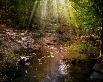 Enchanted Forest Photo, Sun Rays, Fantasy Background, Fairly Land, Forest Photo, Wetlands Photography, Fairly Land Nature Backdrop Wall Art