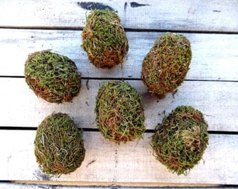 Moss Eggs Natural - Box Of 6 - Organic Decoration - Spring Decoration