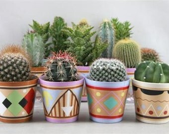 CS) MIXED SPECIES Cactus~Seeds!!!~~~~~~From a Mix of 20+ Varieties!!