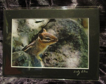 5x7 Matted Photo - Chip or Dale?