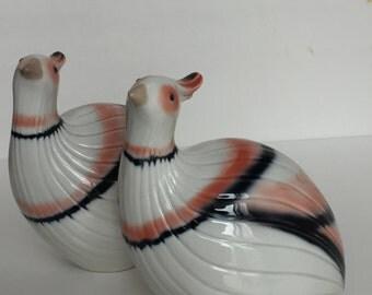 Pair of Tengra Partridges Valencia Spain