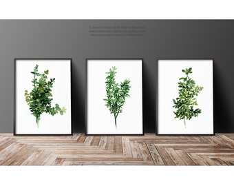 Thyme Herbs set 3 Herb Watercolor Painting, Green Kitchen Wall Decoration, Abstract Minimalist Rustic Home Art Print, Botanical Illustration