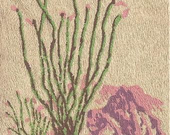 Yucca Wood - Brevifolia Postcard