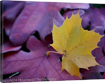 Gold Leaf Canvas Print, 24x36 Canvas Photo, Fall Decor Wall, 20x30 Print on Canvas, 30x40 Large Wall Art, Nature Photography Prints For Wall