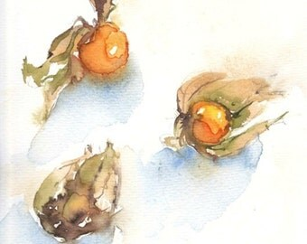 Physalis fruit. Original watercolour.