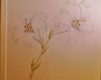 vintage antique original painting watercolour ? of asian lillies beautiful mounted
