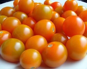 Sun Gold Tomato 4 Plants - Golden Orange Cherry - Super Sweet