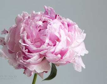 Pink Peony Photo | Flower Styled Photo