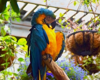 Macaw Parrot Digital Image Bird Photography Parrot Photo Tropical Bird