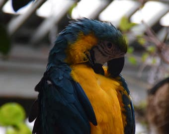 Parrot Digital Image Bird Photography Parrot Photo Tropical Rainforest Bird Macaw Photo