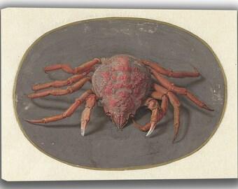 Jan Augustin van der Goes: Crab. Fine Art Canvas. (04066)