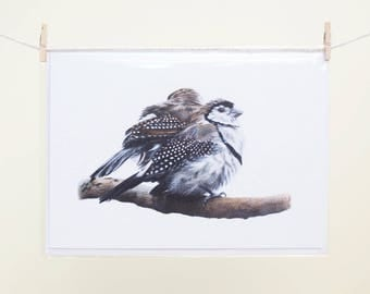 Double-barred Finches - Blank Greeting Card