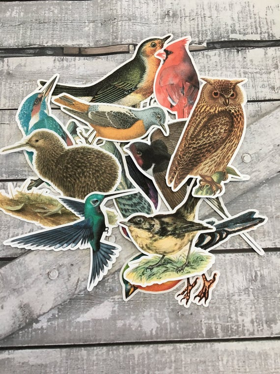 Large Vintage Birds Die Cuts,Paper Embellishments,Art Journal Supplies,Scrapbooking,Mixed Media Supplies,Scrapbook Die Cuts,Bird Cut Outs