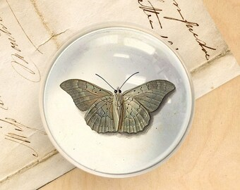 Butterfly Paperweight. Vintage Style Butterfly Glass Domed Paperweight. Office Décor. Crystal Paperweight. Desk Glass Accessory.
