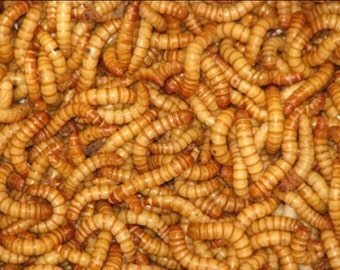 Meal Worms(500)