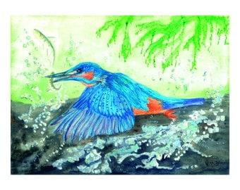 Limted edition Kingfisher print.