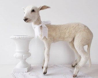SOLD Don't buy!!! Vintage Taxidermy Lamb White Sheep