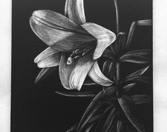 Framed Original Lily Scratchboard Art Etching 5x7