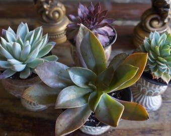 Mini Antique Metal Succulent Planters