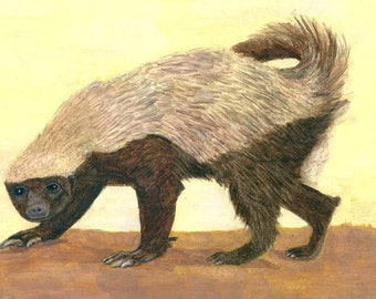 A Honey Badger Illustration. This Honey Badger Close up A4 Print, Ideal for Storytelling Art Lovers, Honey Beekeepers, And Wild Animal Art.