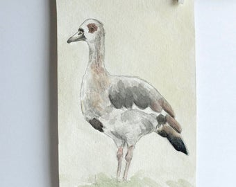 Egyptian Goose, original watercolour