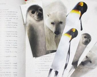 Three Winter Animals Bookmarks&Postcards