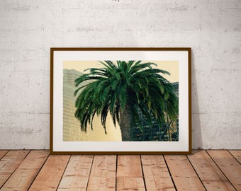 "California photography, San Francisco, ""Wild Palms"", 20 cm x 30 cm, 8"" x 12"""