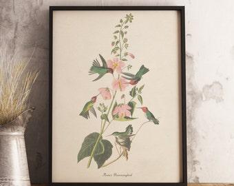 Anna's Hummingbird Print:INSTANT DIGITAL DOWNLOAD Bird print, Antique Bird Painting