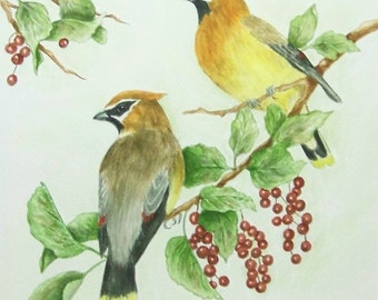 Cedar Waxwing Pair, Realistic watercolor painting of a male and female Cedar Waxwing pair.