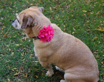 "3"" Eyelet Dog Flower Available in Mutliple Colors, Custom Size Loop, Dog Flower, Dog Accessory, Dog Collar Flower"
