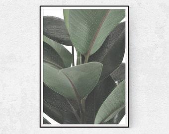 Plant Photo, Botanical Wall Art, Leaf Print, Scandinavian Wall Decor, Fig Plant, Minimalist Poster, Cactus Print, Home Download, Modern Home