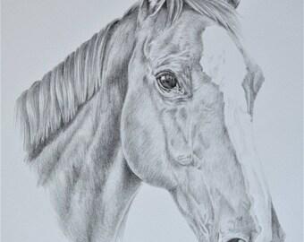 Custom pet portrait graphite pencil drawing