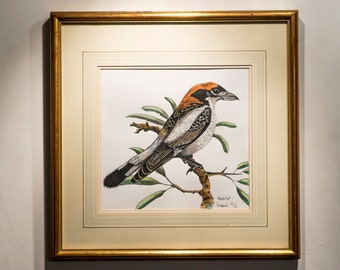 Woodchat Shrike Original Framed Drawing - Ink And Watercolour