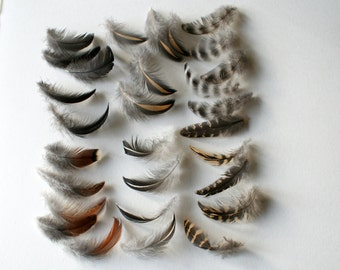 """Chicken feathers - Cruelty free - Natural - Real bird feathers - Assortment - Mix - 2-3"""" - qty 30"""